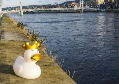 Queen Duck in Inverness